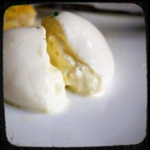 BURRATA COOPERATIVE